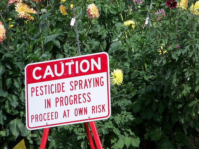 Pesticides may be bad for you, but they are devastating for your great grandchildren, because there will be no great great grandchildren. Photo Credit: JetsandZeppelins from Flickr under CC BY 2.0 license