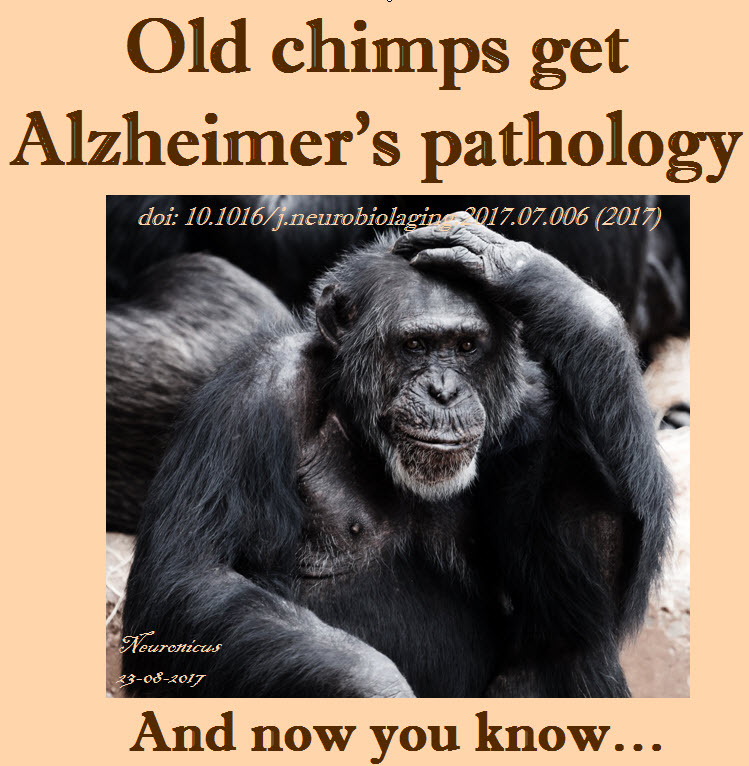121-chimps get Alz - Copy