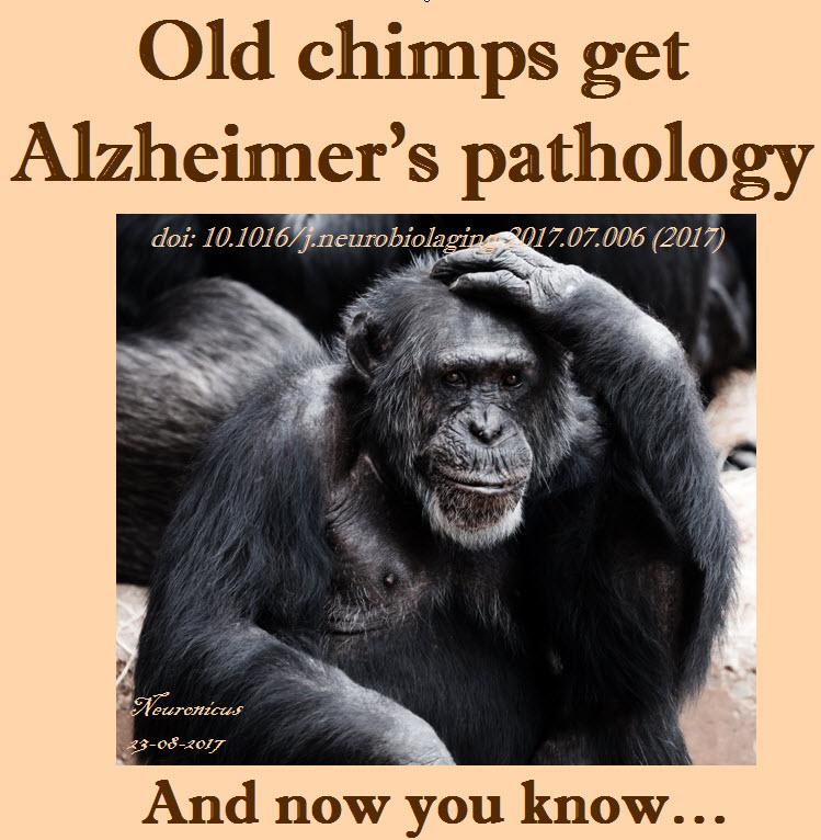 121-chimps get Alz - Copy