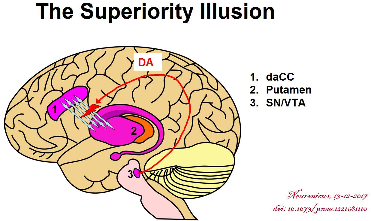 The Superiority Illusion The Science Portal