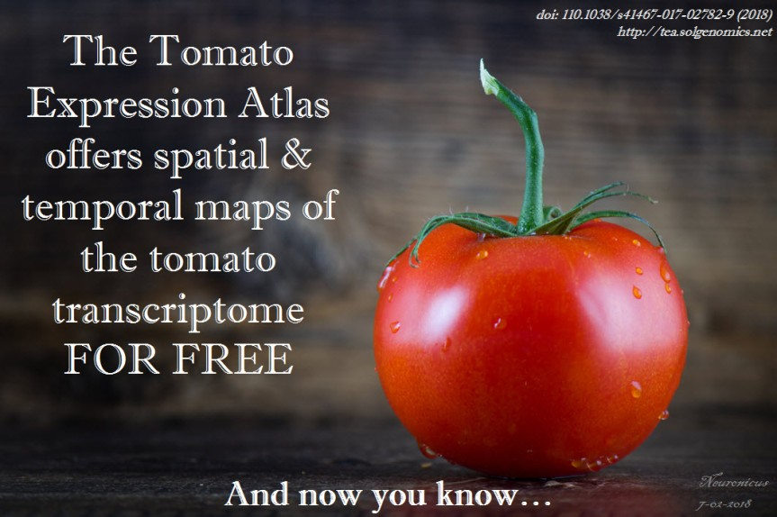 130-tomato - Copy